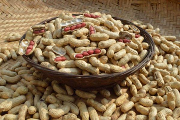 زراعة الفول السوداني بالتلقيح البكتيري lo-1485287735_579.jpg