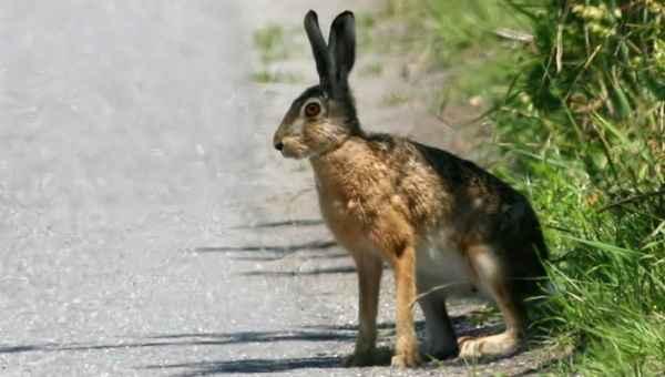 أسرع 10 مخلوقات بالعالم أسرع-الحيوانات-بالعالم-9.jpg