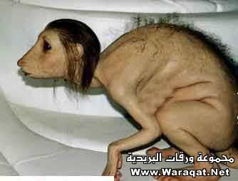 بعض الاكاذيب المنتشرة على الانترنت picture_1551996814_196.jpg