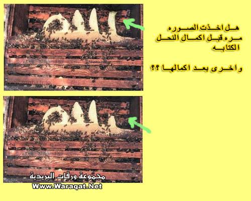 بعض الاكاذيب المنتشرة على الانترنت picture_1551996822_241.jpg