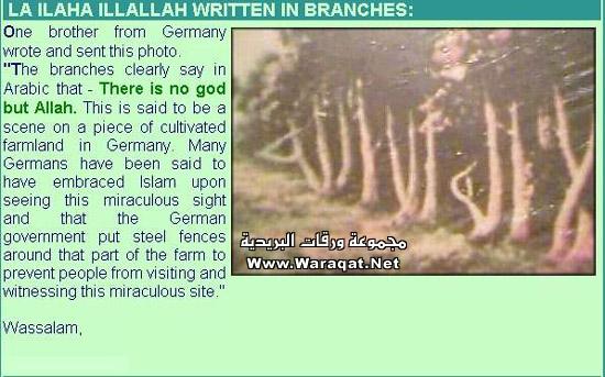 بعض الاكاذيب المنتشرة على الانترنت picture_1551996826_457.jpg