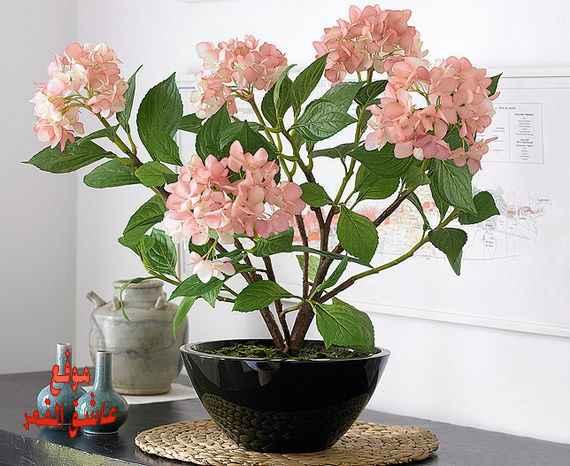 lo3m.com_1360816830_981.jpg