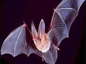 طريقة جعل الساحر الخفاش يطير ثم يعود للحياة مرة اخري - سر حيلة موت الطائر وعودته حيا lo3m.com_1389022861_136.jpg